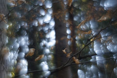 Bokeh de Swirly da floresta imagem de stock