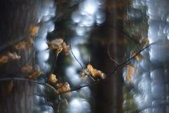 Bokeh de Swirly de région boisée photo stock