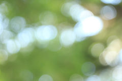 Bokeh or defocus background. Royalty Free Stock Photos