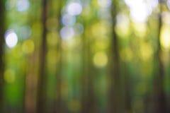 Bokeh del bosque Fotos de archivo