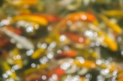 Bokeh del estanque de peces de lujo del koi Foto de archivo