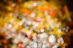 Bokeh del estanque de peces de lujo del koi Imagen de archivo