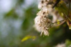 Bokeh del extremo de la flor blanca Fotos de archivo libres de regalías