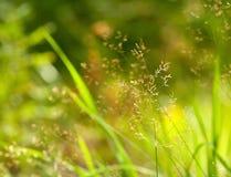 Bokeh dell'erba Fotografia Stock Libera da Diritti