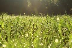 Bokeh dell'erba di mattina Fotografie Stock Libere da Diritti