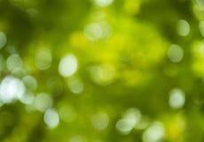 Bokeh des Baumhintergrundes Stockbild