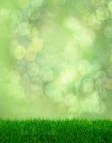 Bokeh di fantasia della sorgente dell'erba verde Fotografia Stock