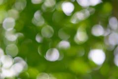 Bokeh di luce dall'albero fotografia stock