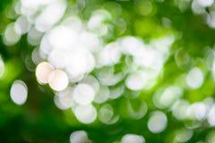 Bokeh di luce dall'albero immagine stock