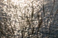 Bokeh di luce solare e dell'erba sul mare Immagine Stock