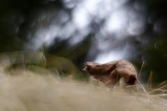 Bokeh di Swirly fotografie stock