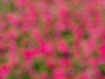 Bokeh do borrado das flores Fotografia de Stock