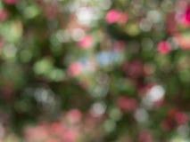 Bokeh do borrado das flores Fotos de Stock Royalty Free