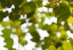 Bokeh do fundo da árvore Foto de Stock