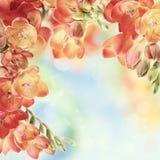 春天在bokeh背景的小苍兰花 免版税库存照片