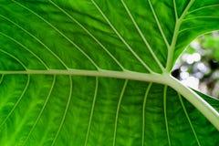 Bokeh door het Tropische blad Stock Fotografie