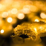 Bokeh dorato dell'oro e del fiore Fotografie Stock