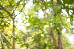 Bokeh drzewo fotografia stock
