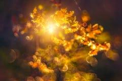 bokeh en nature, feuilles et soleil photographie stock