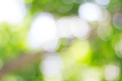 Bokeh et fond vert brouillé de nature Images libres de droits