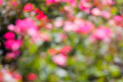 Bokeh in a Flower Garden Stock Image