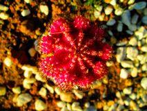 Closeups plant macro shots. Bokeh flower shots closeups garden stock photos