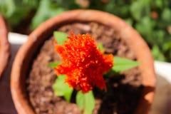 Closeups plant macro shots. Bokeh flower shots closeups garden stock photography