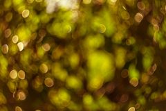Bokeh from gold color leaves as a background. focus lens blur. Royalty Free Stock Photo
