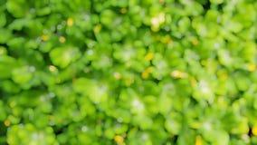 Bokeh gräsplan lämnar bakgrund Arkivbild