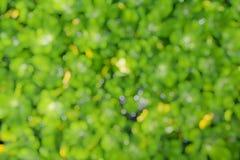 Bokeh gräsplan lämnar bakgrund Royaltyfria Foton