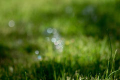 Bokeh in the grass. Bubbles turned into bokeh when they landed on the grass Royalty Free Stock Image