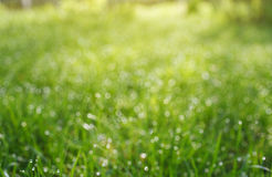 Bokeh grass with dew drops Royalty Free Stock Images