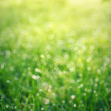 Bokeh grass with dew drops Royalty Free Stock Photo