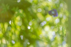 Bokeh from green leaves as a background. focus lens blur. Stock Image