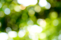 Bokeh green, natural background. Bokeh green, natural background color Royalty Free Stock Photography