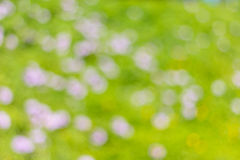 Bokeh. Green spring nature background with bokeh Royalty Free Stock Photography