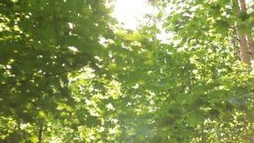 Bokeh hermoso, fondo abstracto, el sol en el follaje, el movimiento abajo almacen de video
