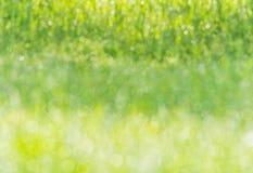 Bokeh humide brouillé de lumière du soleil de rosée de pré d'herbe de fond photo libre de droits