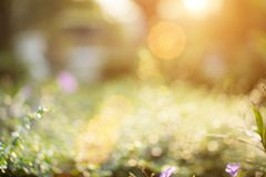 Bokeh leaf with sunlight Royalty Free Stock Photos