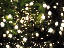 Bokeh between leaves. Bokeh of light that shines through the leaves Stock Photography