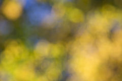 Bokeh of leaves Royalty Free Stock Photography