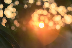 Bokeh ligh tree with flare. Backlit light circle green leaf Royalty Free Stock Images