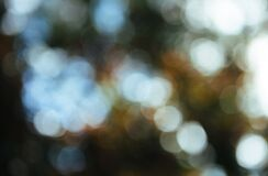 Bokeh light background Stock Photography