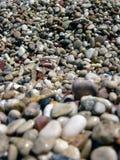 Bokeh macro natural da praia do mar do seixo foto de stock