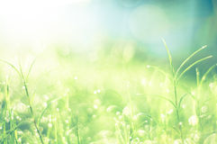 Bokeh in the morning for background Royalty Free Stock Photo