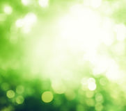 Bokeh in morning forest Stock Photography