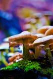 Bokeh Mushroom Royalty Free Stock Photos