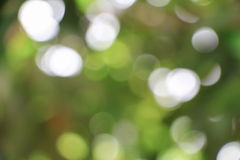 Bokeh natural color  warm background. Filter leaf of the tree fr. Esh green , abstract  blurred foliage and bright summer sunlight. with copy space Royalty Free Stock Photos