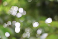Bokeh natural color  warm background. Filter leaf of the tree fr. Esh green , abstract  blurred foliage and bright summer sunlight. with copy space Royalty Free Stock Images