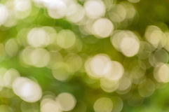 Bokeh naturale Immagine Stock